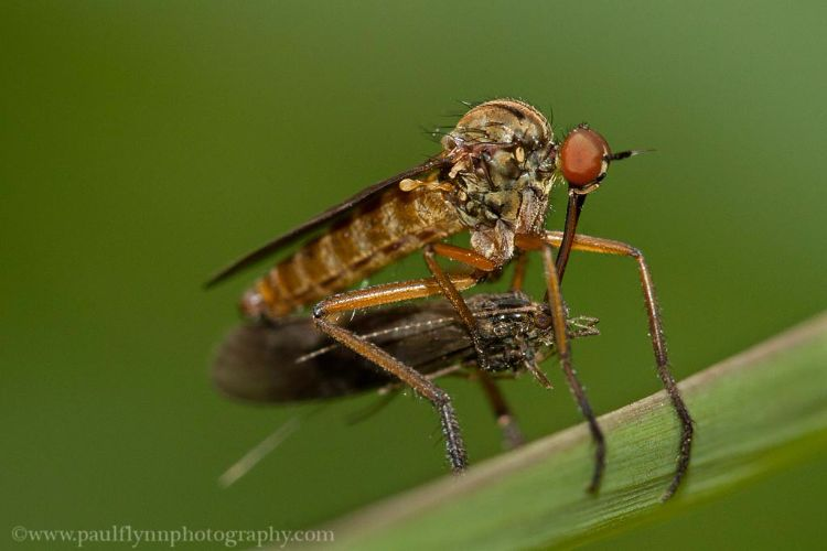 Insects-2015 3082