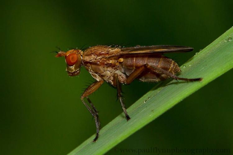 Insects-2015 3169