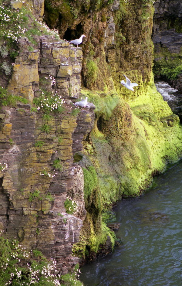 Cliff at North Broadhaven