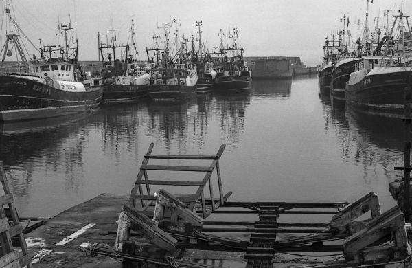 A busy Lossiemouth harbour