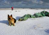 On the beach near Rattray Head