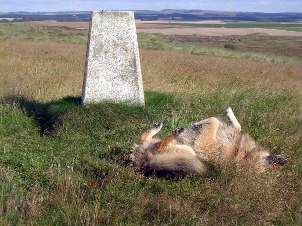 Rolling at trig point