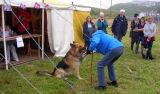 Dog show - 'Paw'.