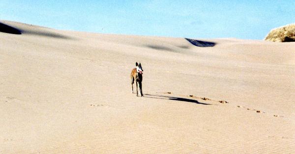 Sand sheet at Menie, 2006. The Menie story - Part 2