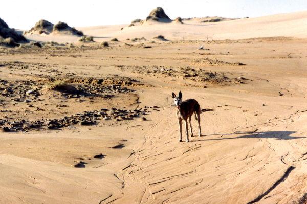 Dunes, Menie estate. Part 3, the Menie story