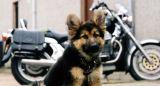 Riley and Moto Guzzi - the teenage years
