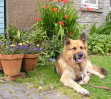 Riley 'guarding' the courtyard