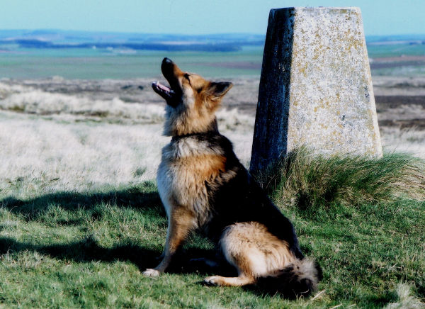 Yawning, trig point