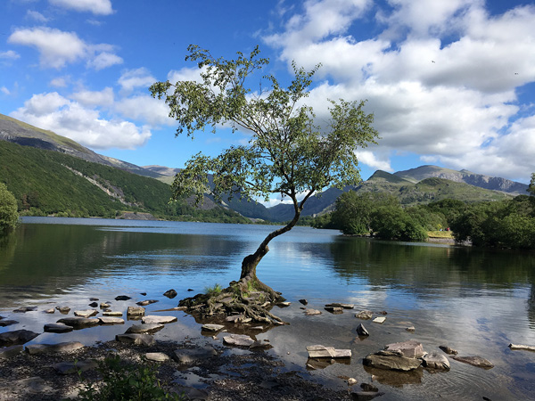 1st Place Lone tree Llanberis by Susan Cordiner
