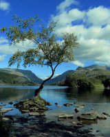 3rd Place Lone Tree Llanberis by Susan Cordiner