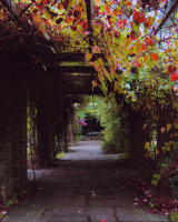 A Tunnel of Leaves Susan Cordiner Commended