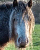 Animal Portrait First Kelvin Townsend
