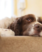 Commended Lazy George by Seetuck Yoong