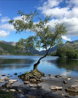 Commended Lone Tree Llanberis by Susan Cordiner