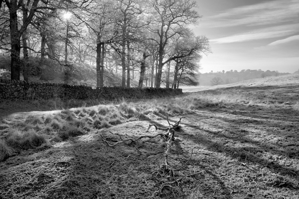 Commended Woodland Shadows by Clive Pearson