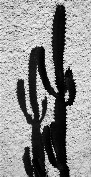 HC Cactus Friends by John Walters