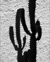 HC Cactus Friends by John Walters