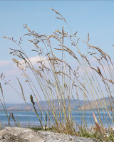 HC Lochside Grasses by Peggy Pics