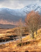HC Trees on Rannoch Moor by Peggy Pics
