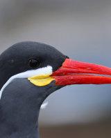 Inca Tern Third Peter Watson