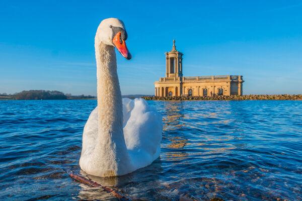 Joint 2nd. Swan at Normanton by Bill Allsopp