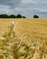 On the Fields of Barley Clive Pearson Highly Commended