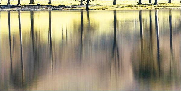Reflected Pines Peter Lucas First