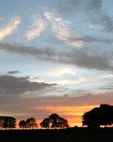 Sunset Copse