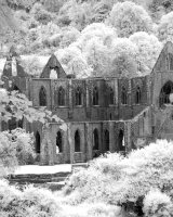 Tintern Through Trees Owen C Thomas