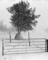 Tree in a Blizzard Arthur Beyless Highly Commended