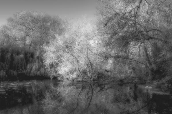 Trees in Water Kelvin Townsend Third