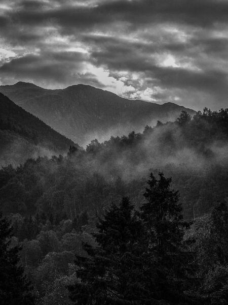 Woodlands by Ph Steven Passalcqua