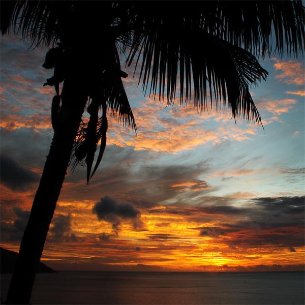Le palmier, Seychelles