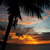 Le palmier The palme Seychelles