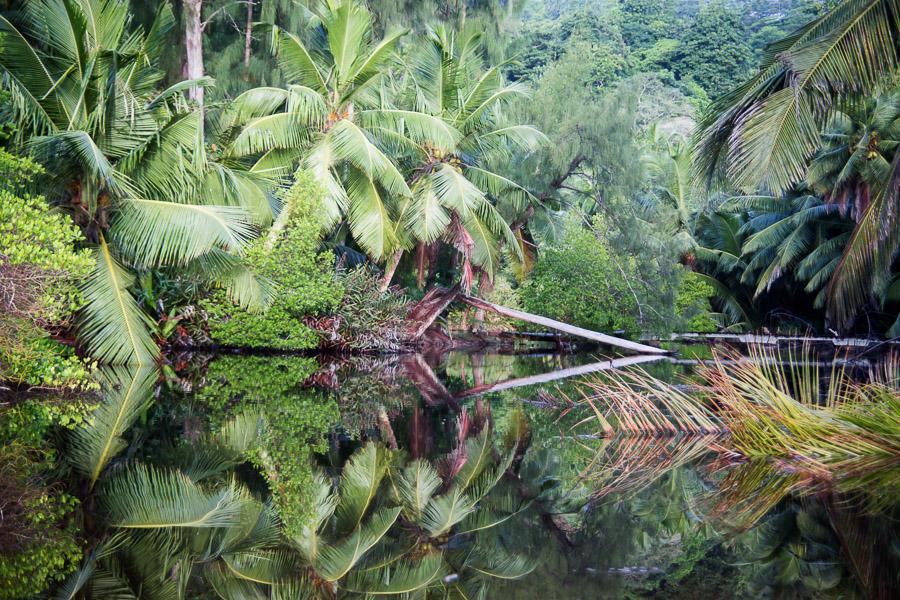 Eau dormante, Seychelles