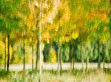 Impression d'automne