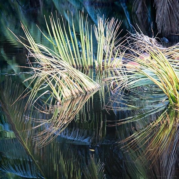 palmes immergées