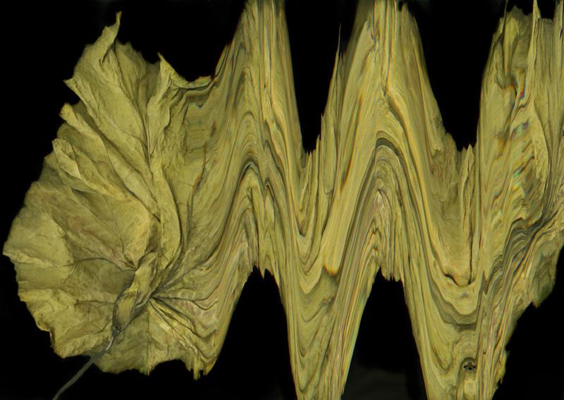 Wayward Leaf