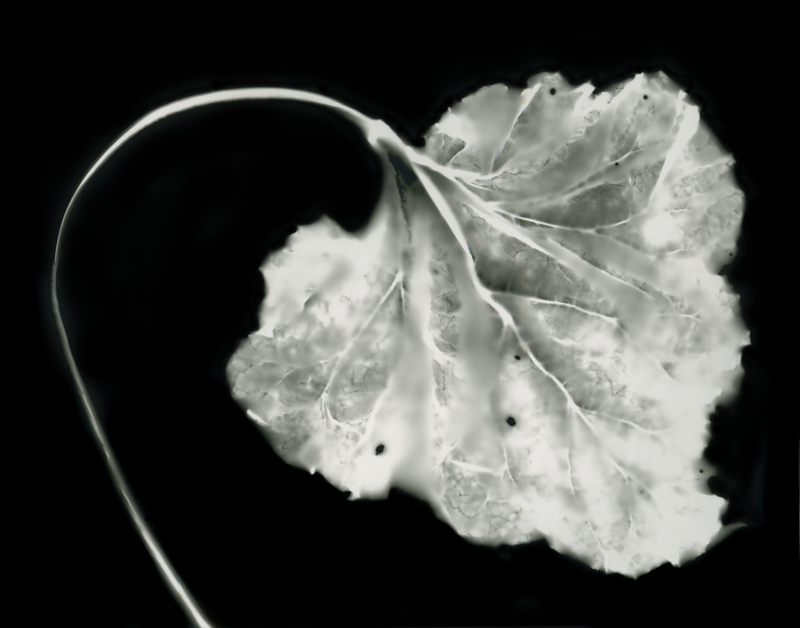 Leaf with Bent Stem, 2010