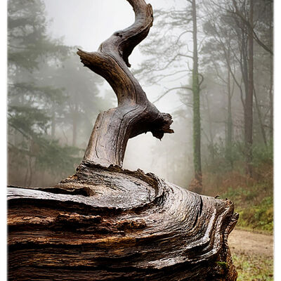 Nature's Sculpture-©Sue Harley (2nd)