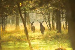 Rambouillet Forest France