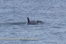 DOLPHIN GALWAY BAY