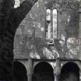 Cloisters, Muckross Abbey
