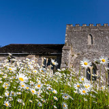 Spring flowers at church of St Nicholas, Bramber, West Sussex 2