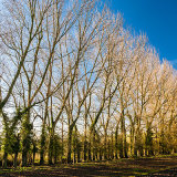 Trees in Autumn, Adur Valley nr St Botolph's, West Sussex 1
