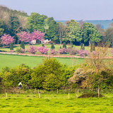 Springtime in the Adur Valley, West Sussex