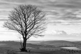 Tree in winter sunlight, Cissbury Ring, West Sussex 3