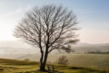 Tree in evening sunlight, Cissbury Ring, West Sussex 3
