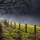 Morning mist nr Golding Barn, Upper Beeding, West Sussex