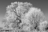 Trees in frost, Upper Beeding, West Sussex
